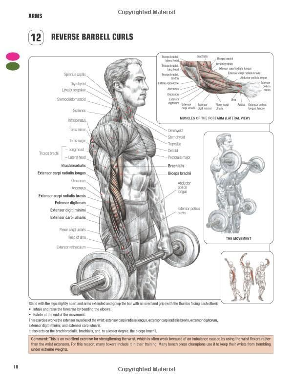 Strength Training Anatomy-3rd Edition | Men\'s biceps & forearm ...