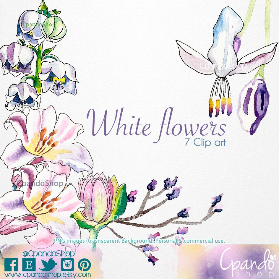 White Flowers (5 Png images with transparent background) watercolor flower clip art, flowers scrapbook, perfect for: wedding invitations