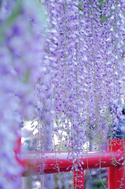 .Purple flowers awwww