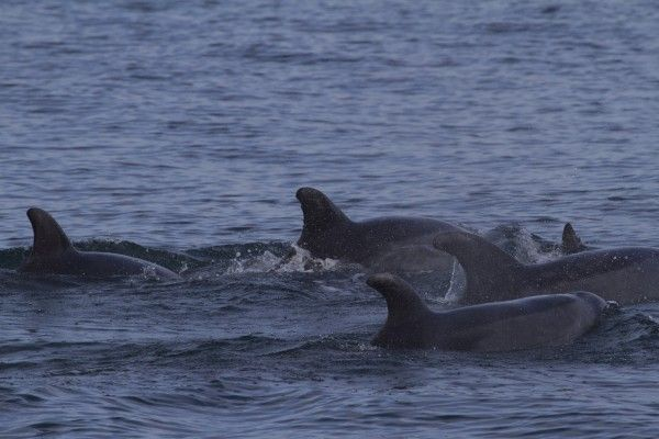 05/29/2014 - Dolphins Guide Scientists to Rescue Suicidal Girl.