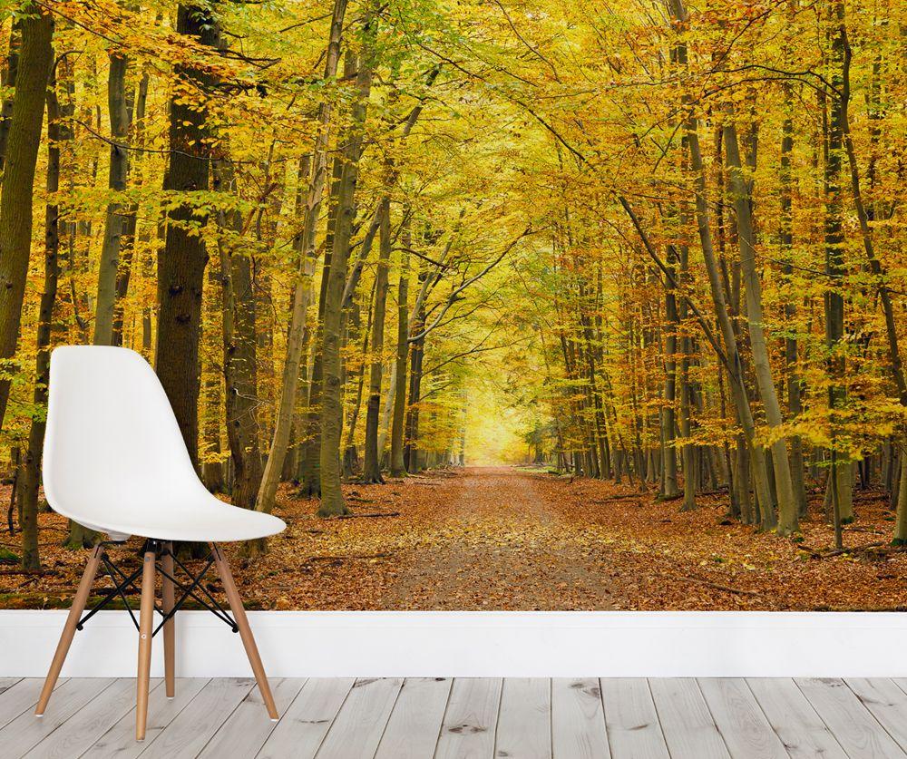 Autumn Pathway Tree Wallpaper Wall Mural | MuralsWallpaper.co.uk ...