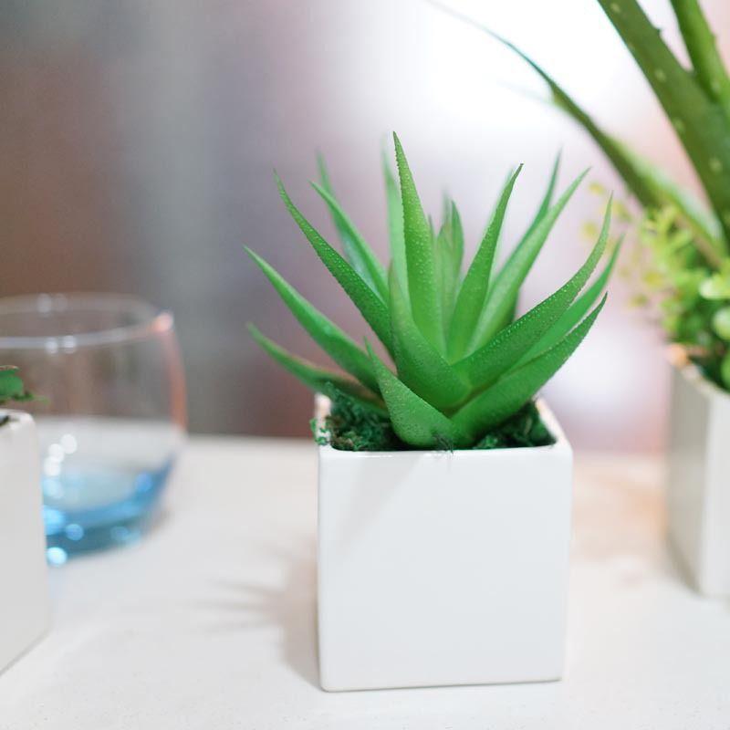 5 Perfect Dorm Room Plants