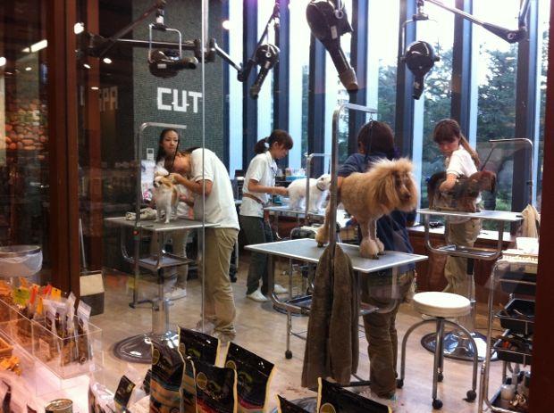 Pin By Jaehee Kim On Pet Friendly Dog Grooming Salons Japanese Dog Grooming Dog Spa
