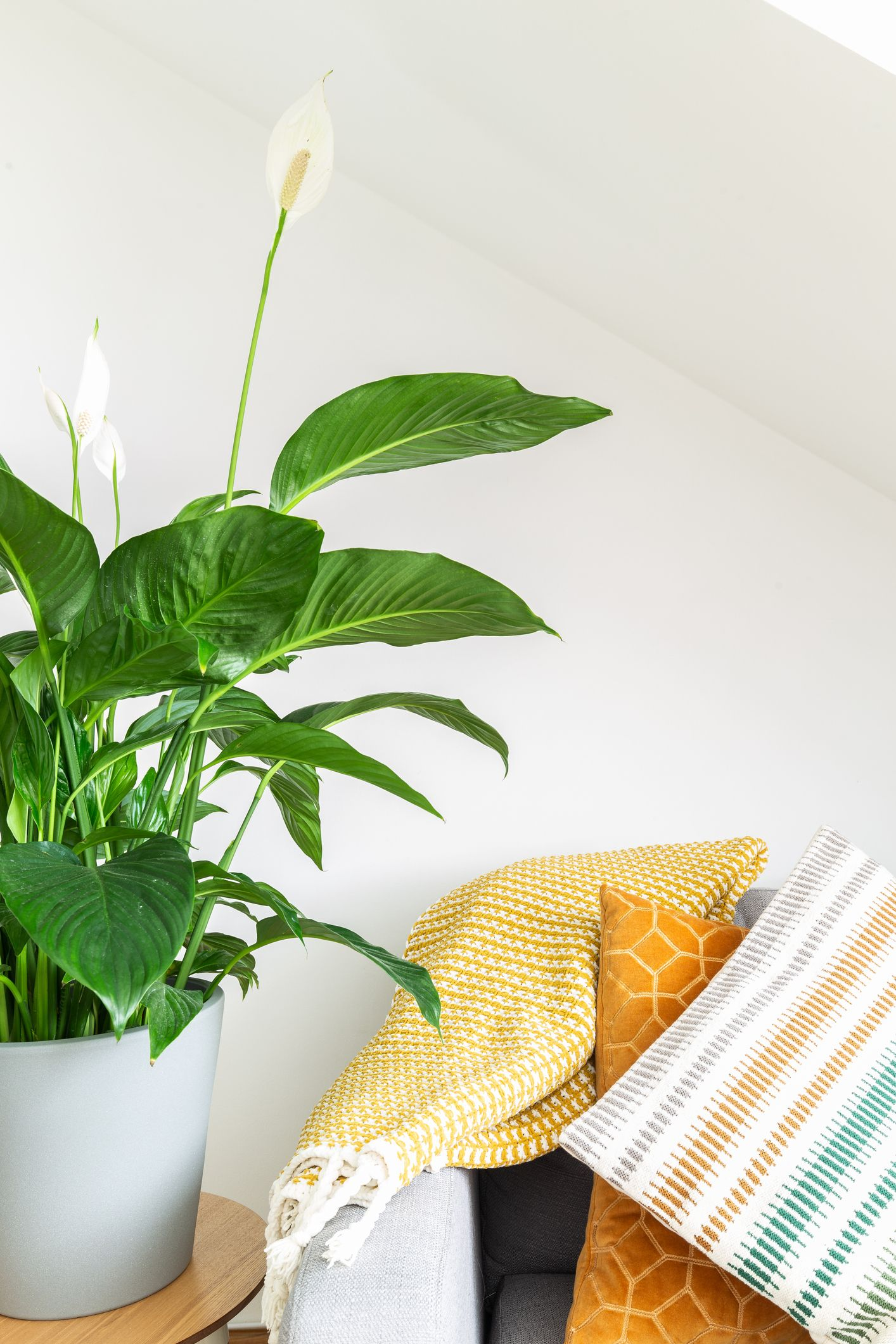Air Filtering Plants | Peace lily flower