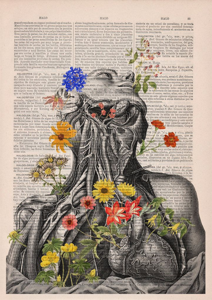 Beautiful Floral Anatomy Illustrations Give New Life to Discarded ...