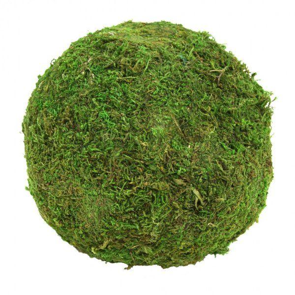 8-Ounce Panacea Spanish Moss Natural