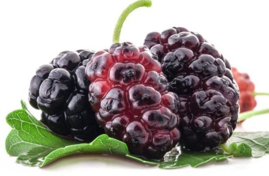 Health Benefits of Mulberries | Organic Facts: Health benefits of mulberries include their ability to improve digestive health, lower cholesterol, aid in weight loss efforts, increase circulation, build bone tissue, boost the immune system, prevent certain cancers, slow down the aging process, lower blood pressure, protect eye health, and improver the overall metabolism of the body.