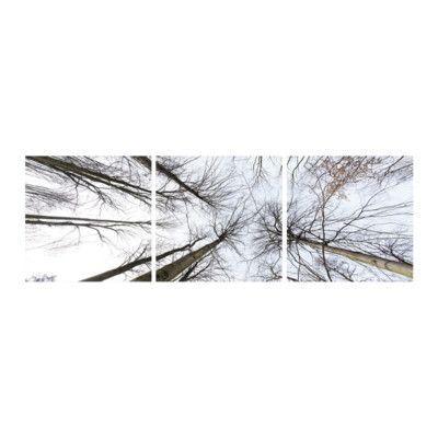 "3 Panel Photo Look Up 3 Piece Photographic Print Set Size: 20"" H x 60"" W x 1"" D"