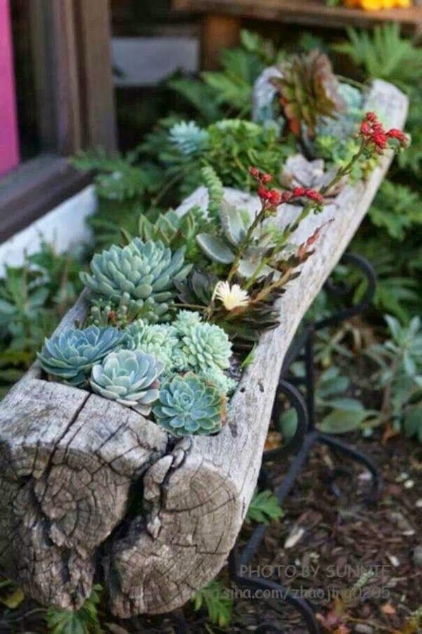 Decoraci n con cactus y suculentas cactus suculentas y for Articulos de decoracion para jardines