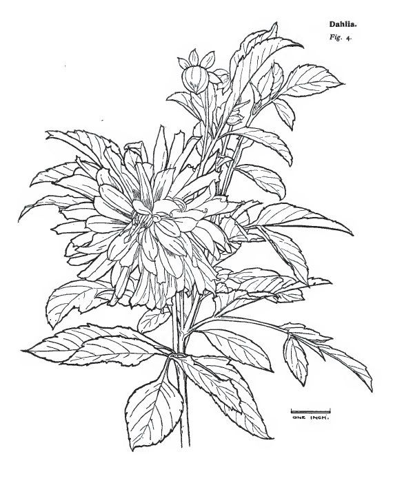 The Illustrated Guide To PLANT and FLORAL STUDIES 152