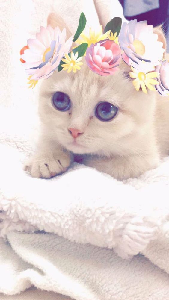 Pin By May On Idk Why I Ve Created This But Enjoy If U R A Cat Pretty Cats Cute Animals Kittens Cutest
