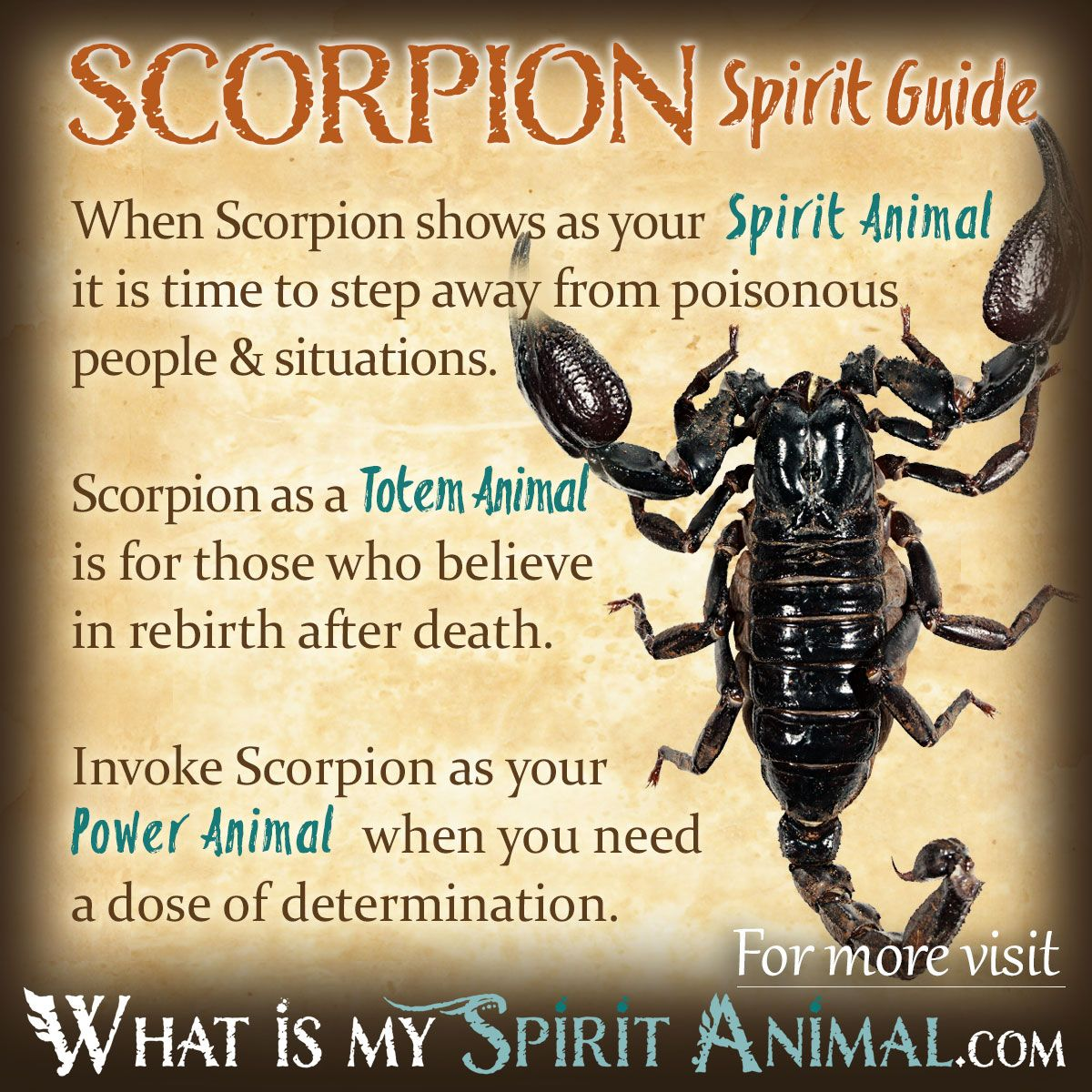Scorpion Symbolism Amp Meaning Wicca Spiritual Animal