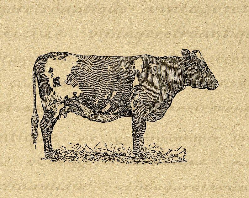 11x14 Printable Image Antique Cow Graphic Farm Animal Illustration Download Digital Vintage Cow Clip Art For Transfers Clip Art Vintage Antique Artwork Cow Art