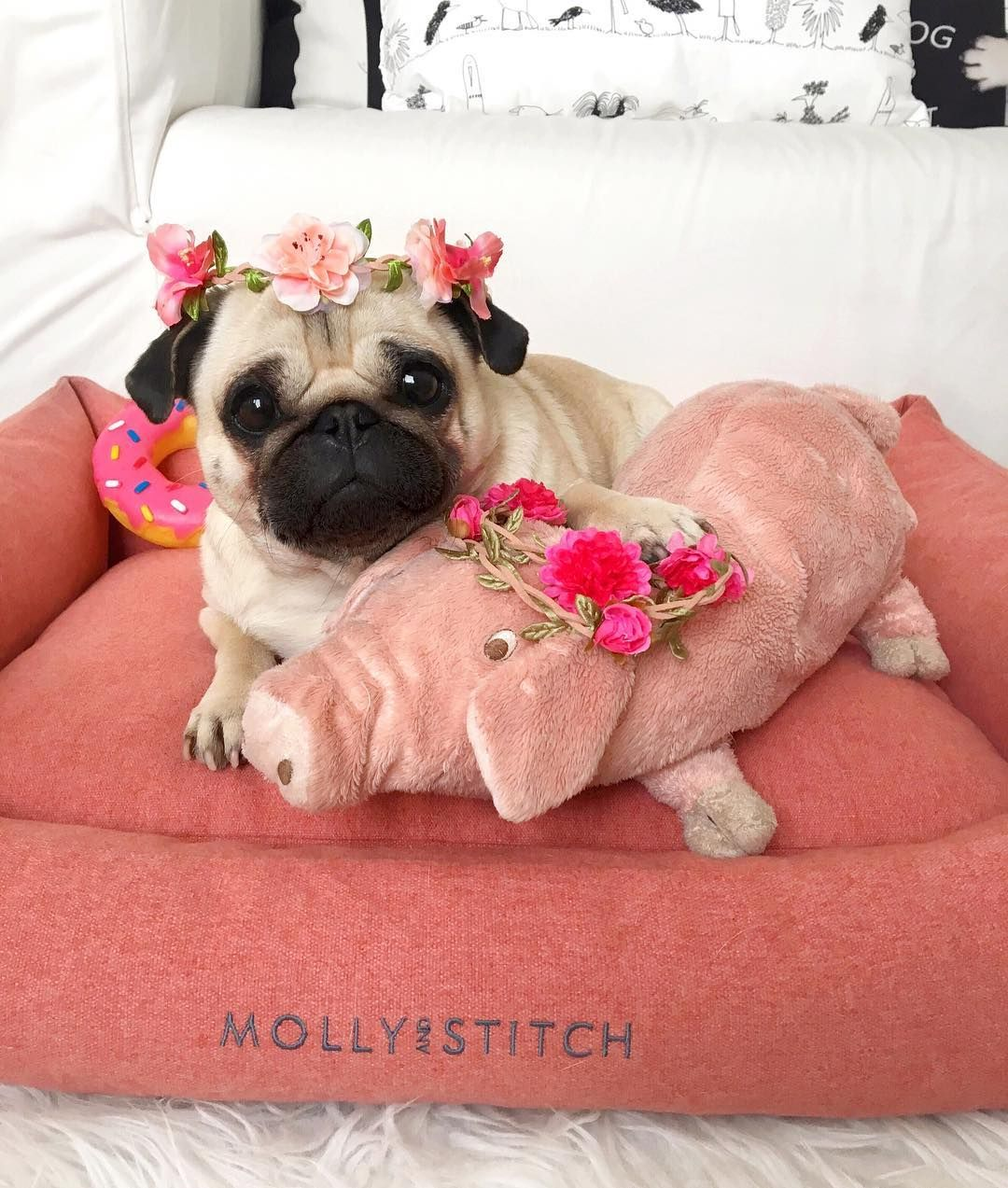 Loulou The Pug And Piggy Cuddling In Our Sweet Dreams Bed 3