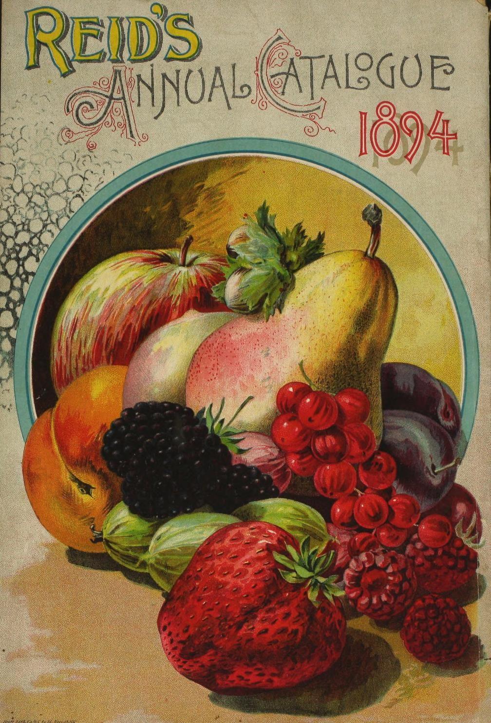 """4pcs 2.5/""""x3.5/"""" FLONZ 412-0137 Vintage Kitchen Fruits Veges Waterslide Decals"""