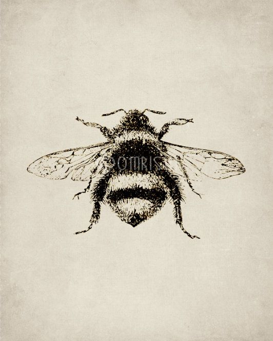 Honey Bee Art Gifts Bee Decor Vintage Art Vintage Bee By Omrishi