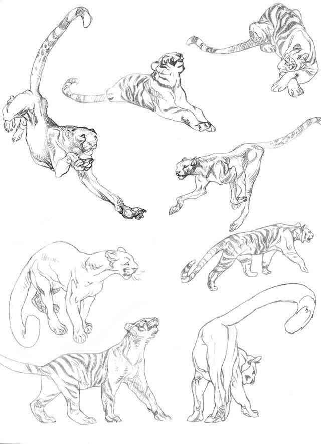 Pin by Abbi Pretorius on Art   Pinterest   Drawings, Animal and ...
