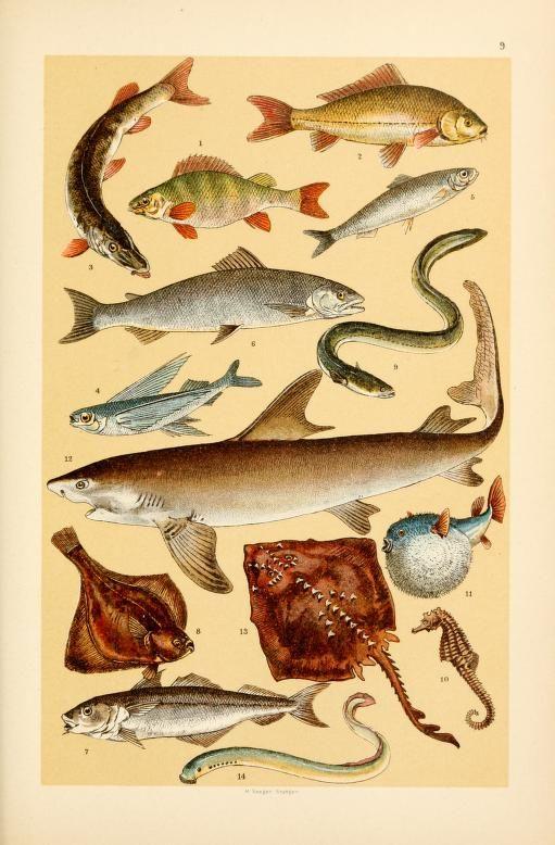 17 Best images about Vintage Scientific Illustration on Pinterest ...