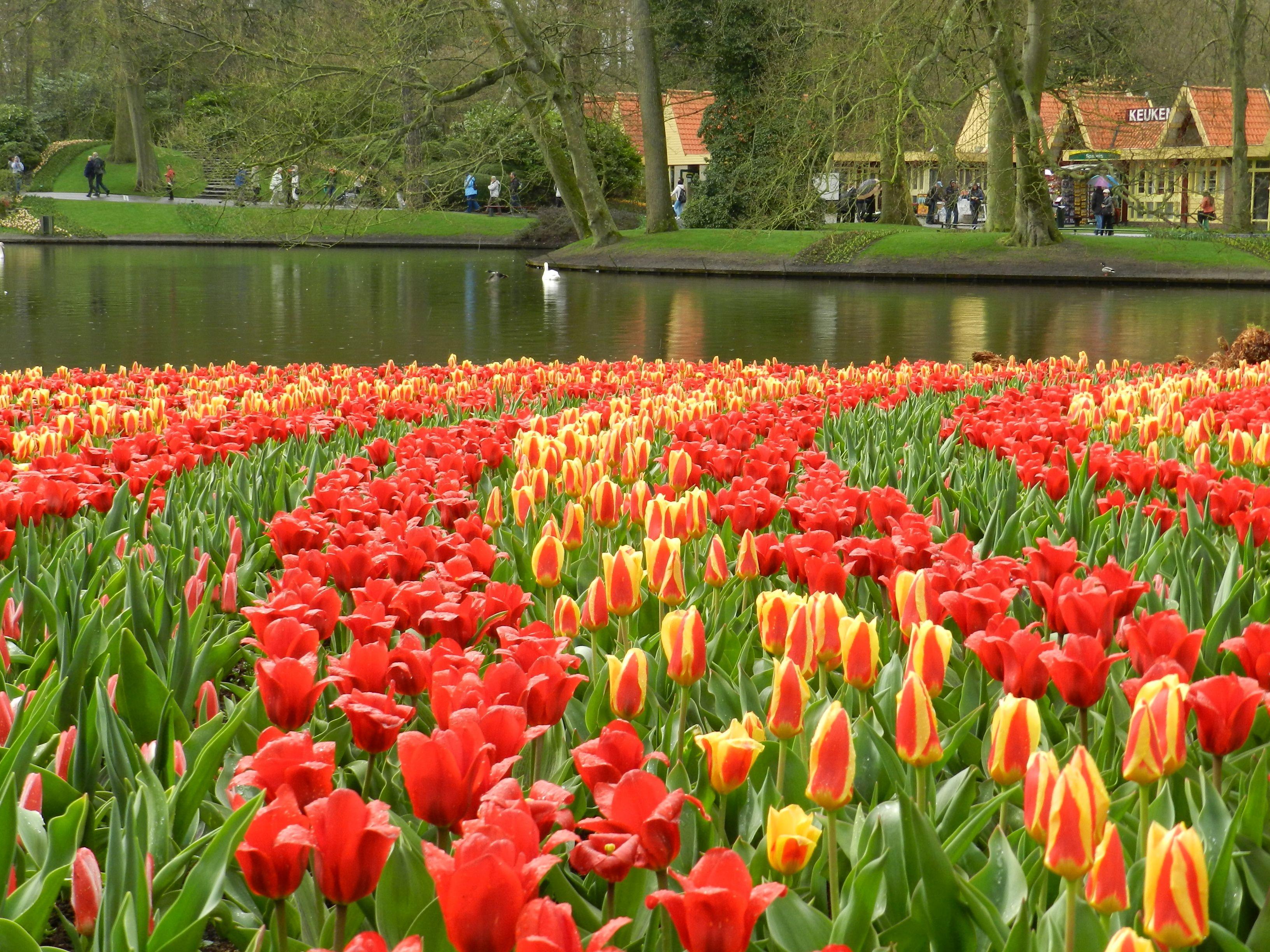 Tulip Garden In Holland Garden Ftempo