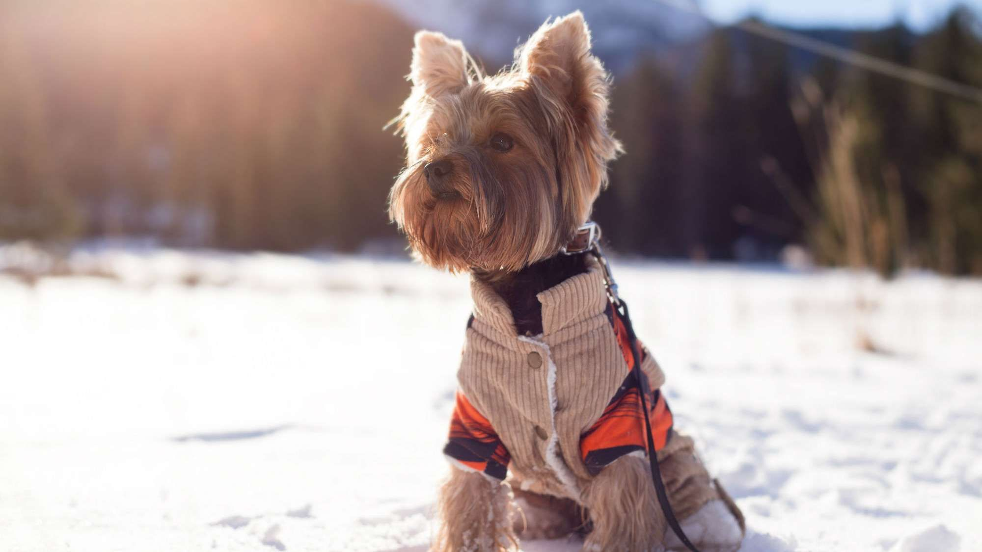 5 Tips For Safely Walking Your Dog In Cold Weather Cold Weather Dogs Dogs Dog Walking