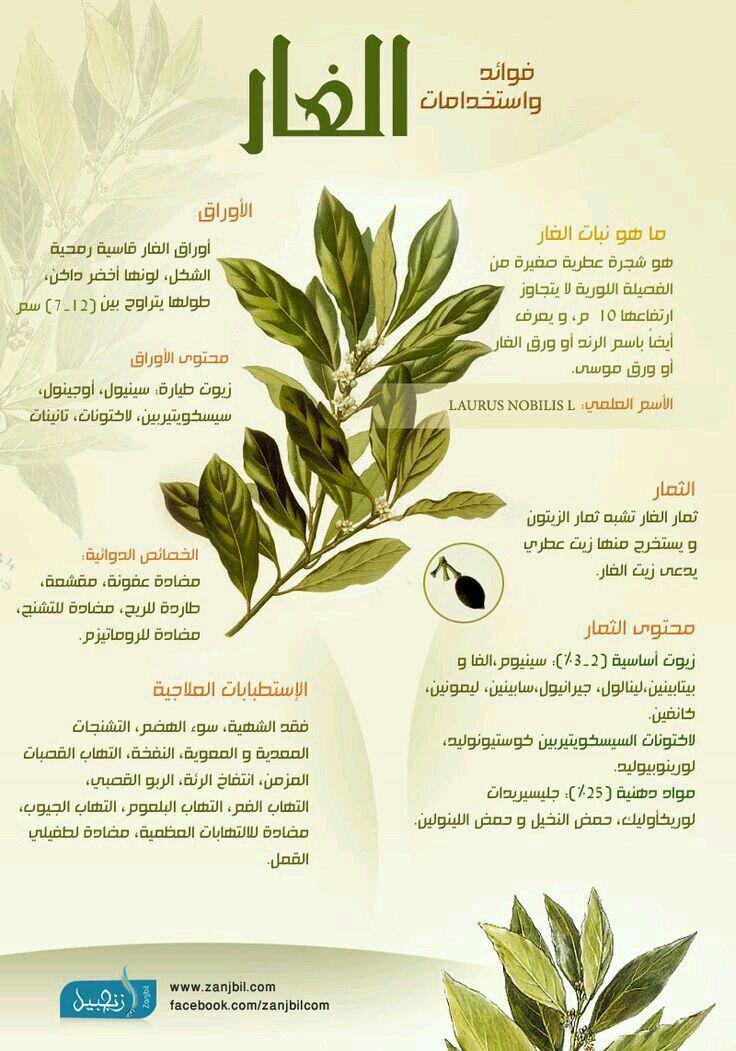 Pin On علاج بالأعشاب
