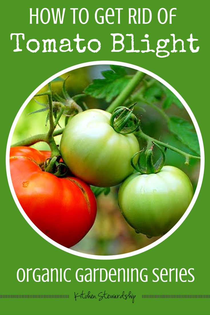 Exclude diseases of tomatoes from a lack or excess of nitrogen, potassium and phosphorus 33
