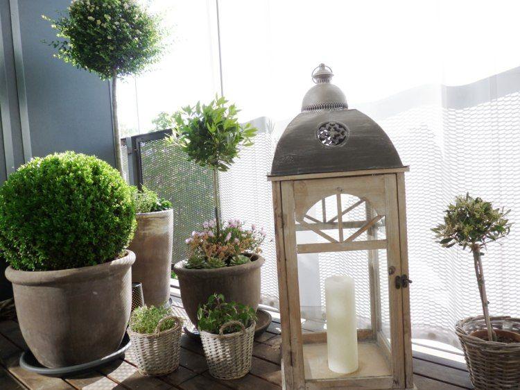 Plantas De Exterior Para Terrazas Y Balcones 38 Ideas Jardi