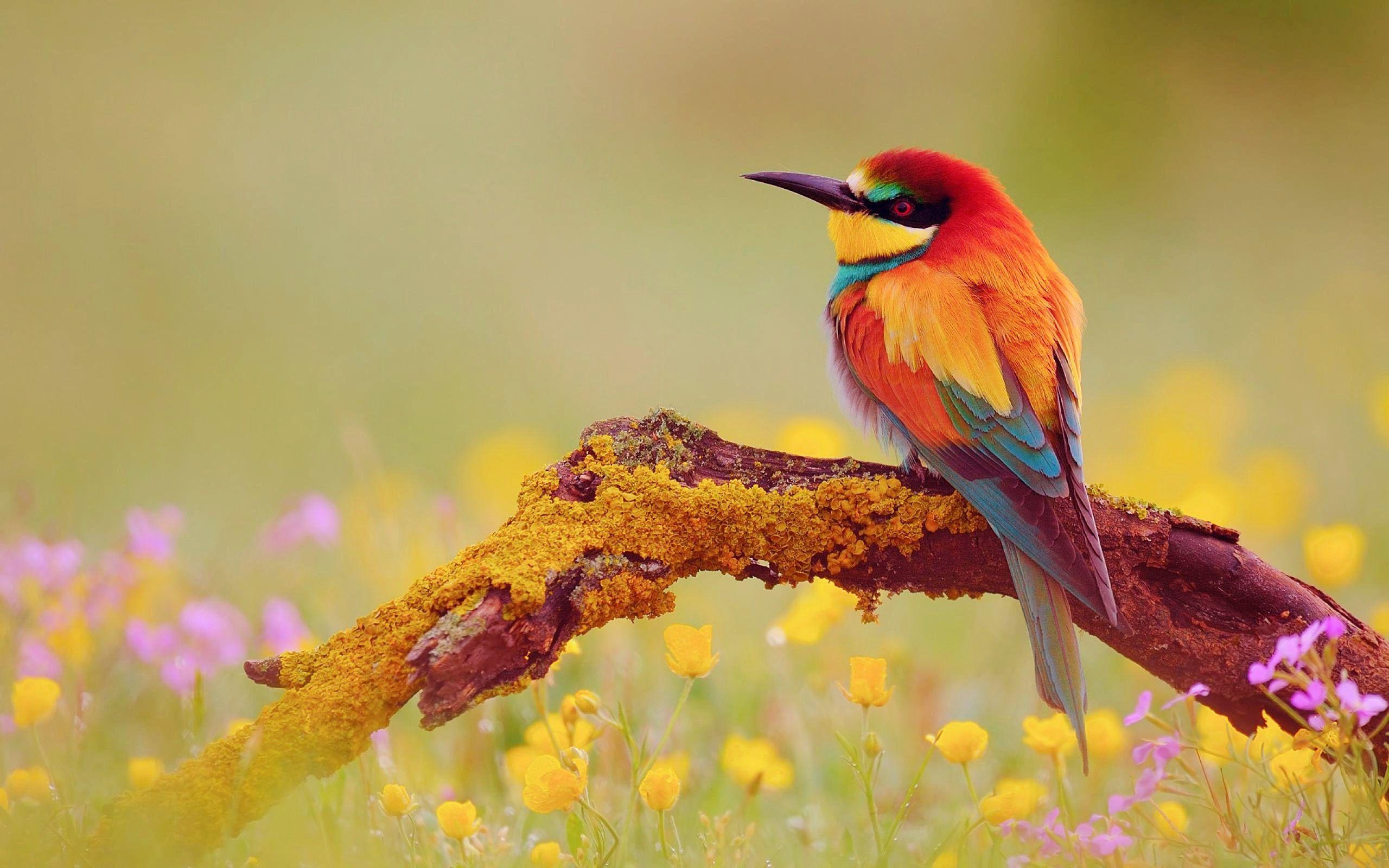 Cute And Pretty Colourful Bird Wallpaper Jpg Jpeg Image 2560 1600 Pixels Scaled 37 Beautiful Bird Wallpaper Birds Wallpaper Hd Most Beautiful Birds