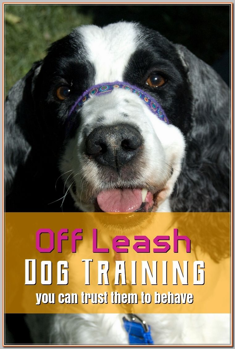 Learning More About Off Leash Dog Training Kevin S Board Off