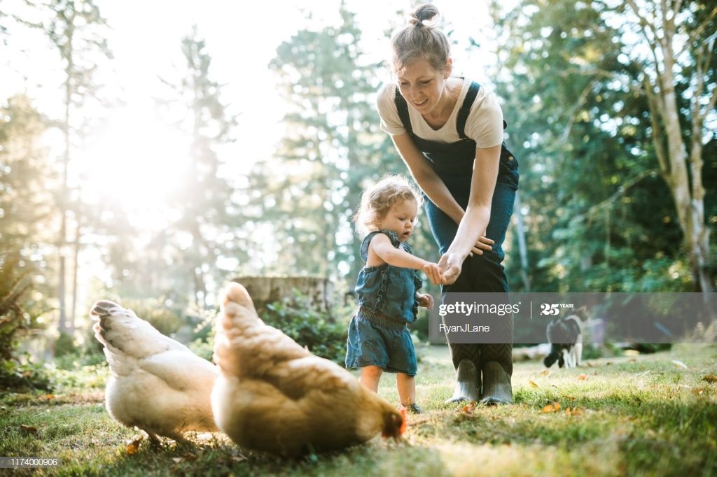 Family With Chickens At Small Home Farm Photography #Ad, , #AD, #Small, #Chickens, #Family, #Photography