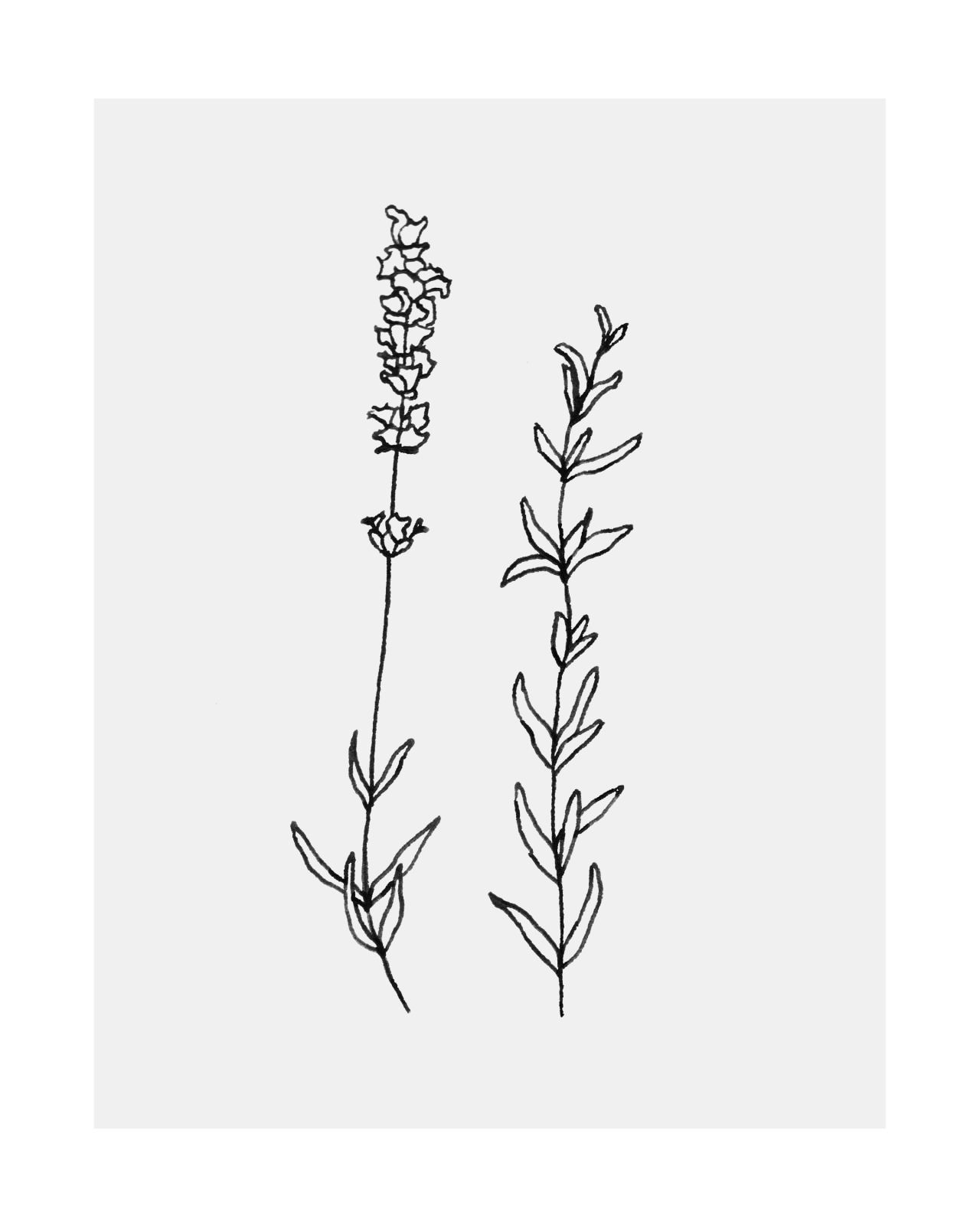 Hometattoo A Sprig Of Lavender And Rosemary