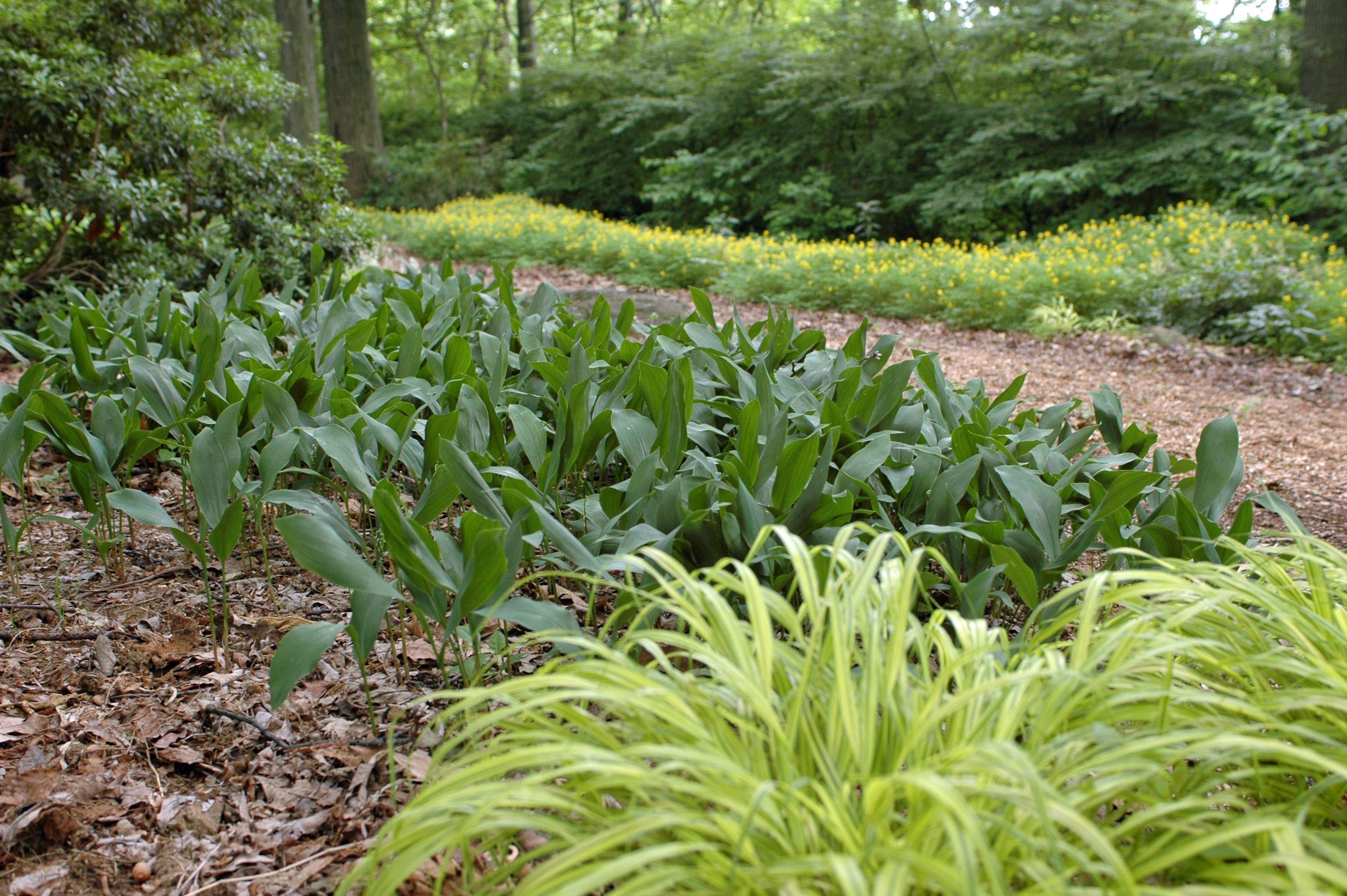 Berwyn PA garden