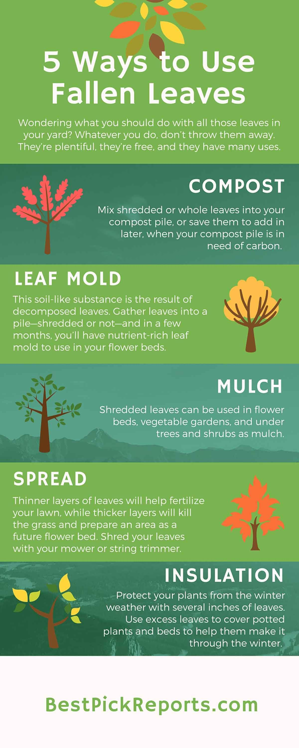 Ways to Use Fallen Leaves