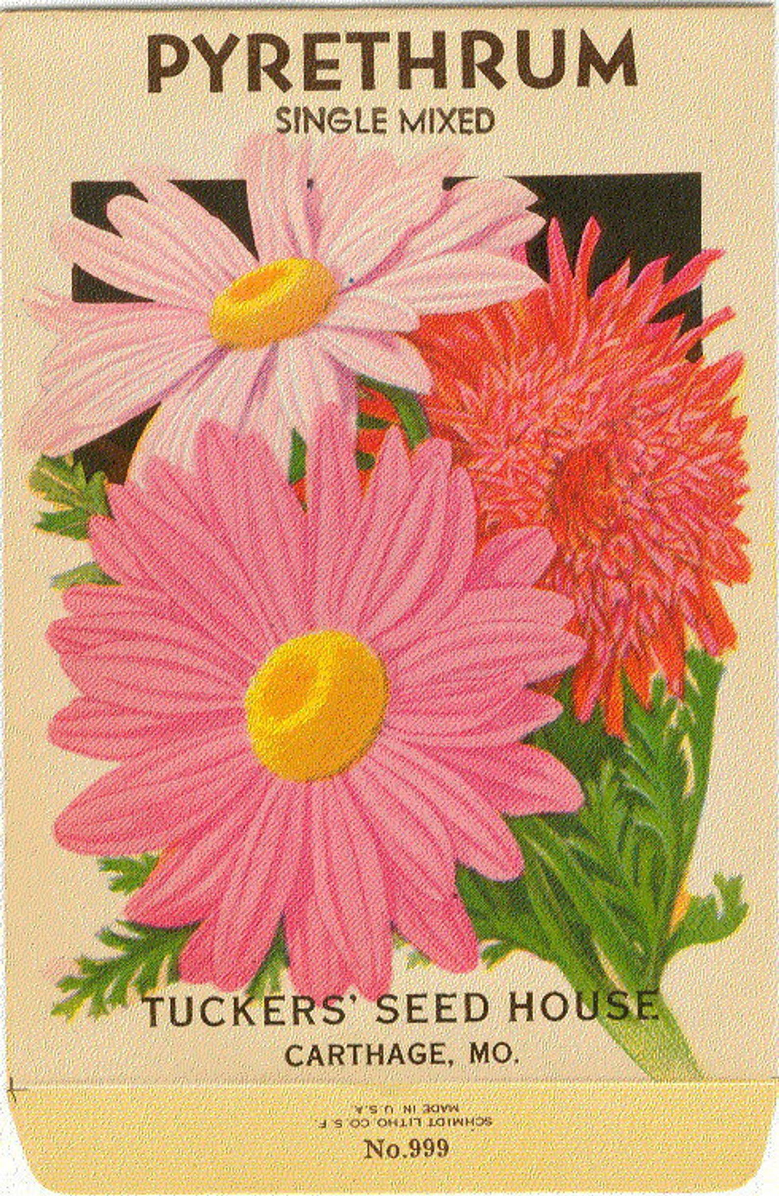 PYRETHRUM Vintage Flower Seed Packet Tucker's Lithograph