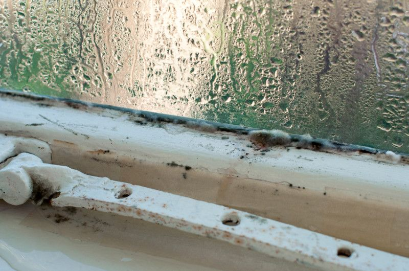 Is Moisture Causing Damage Or Excess Humidty In Your Home Learn How A Dehumidifier In Your Florida Home Can Kee Dehumidifiers Window Condensation Mold Remover