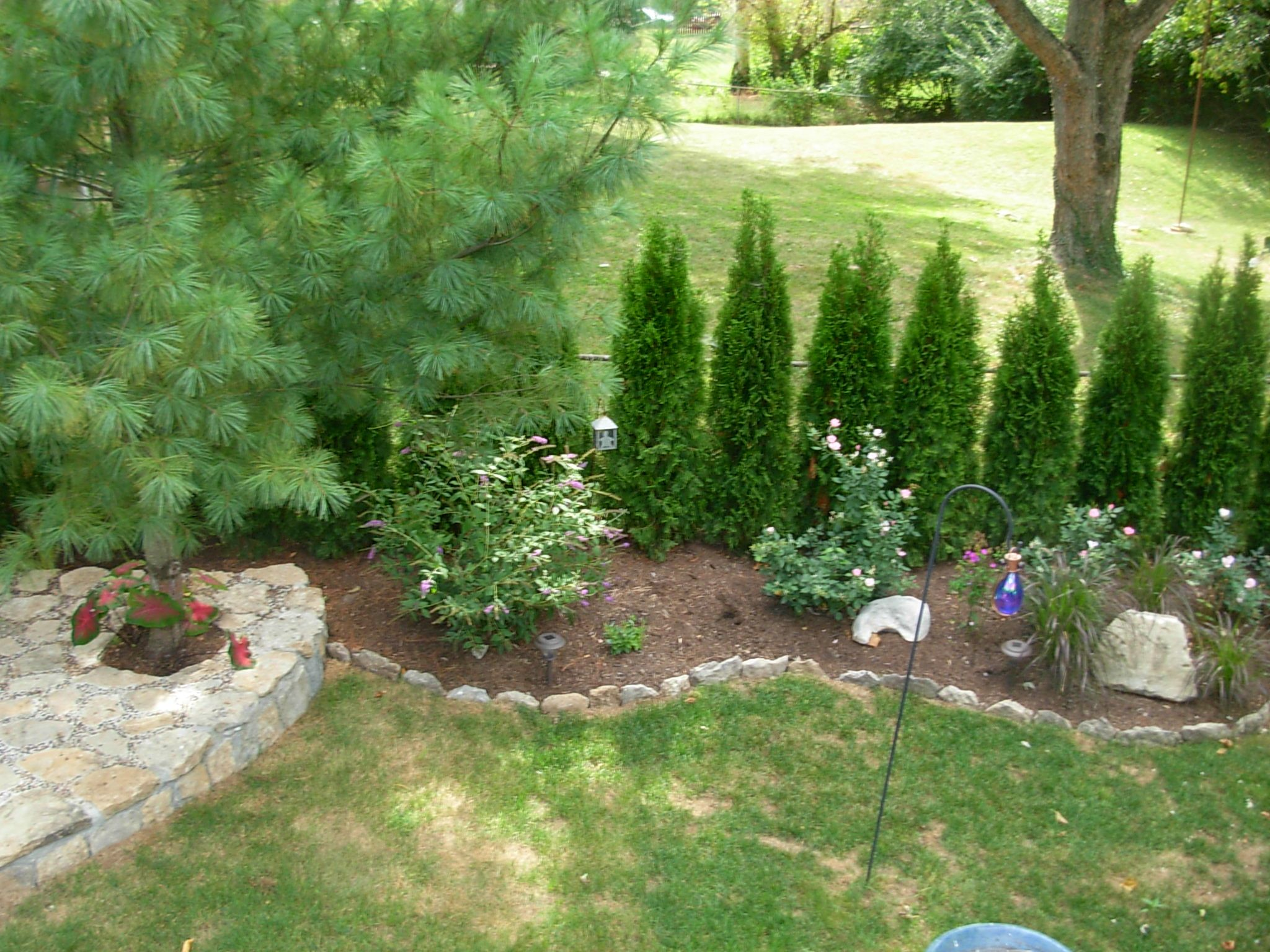 Trees For Privacy, Mulching And Plants Between Property Line And