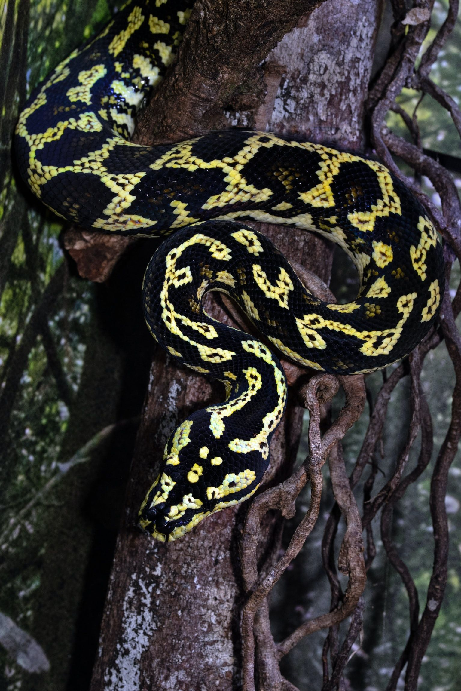black and yellow snake on brown tree branch photo Free