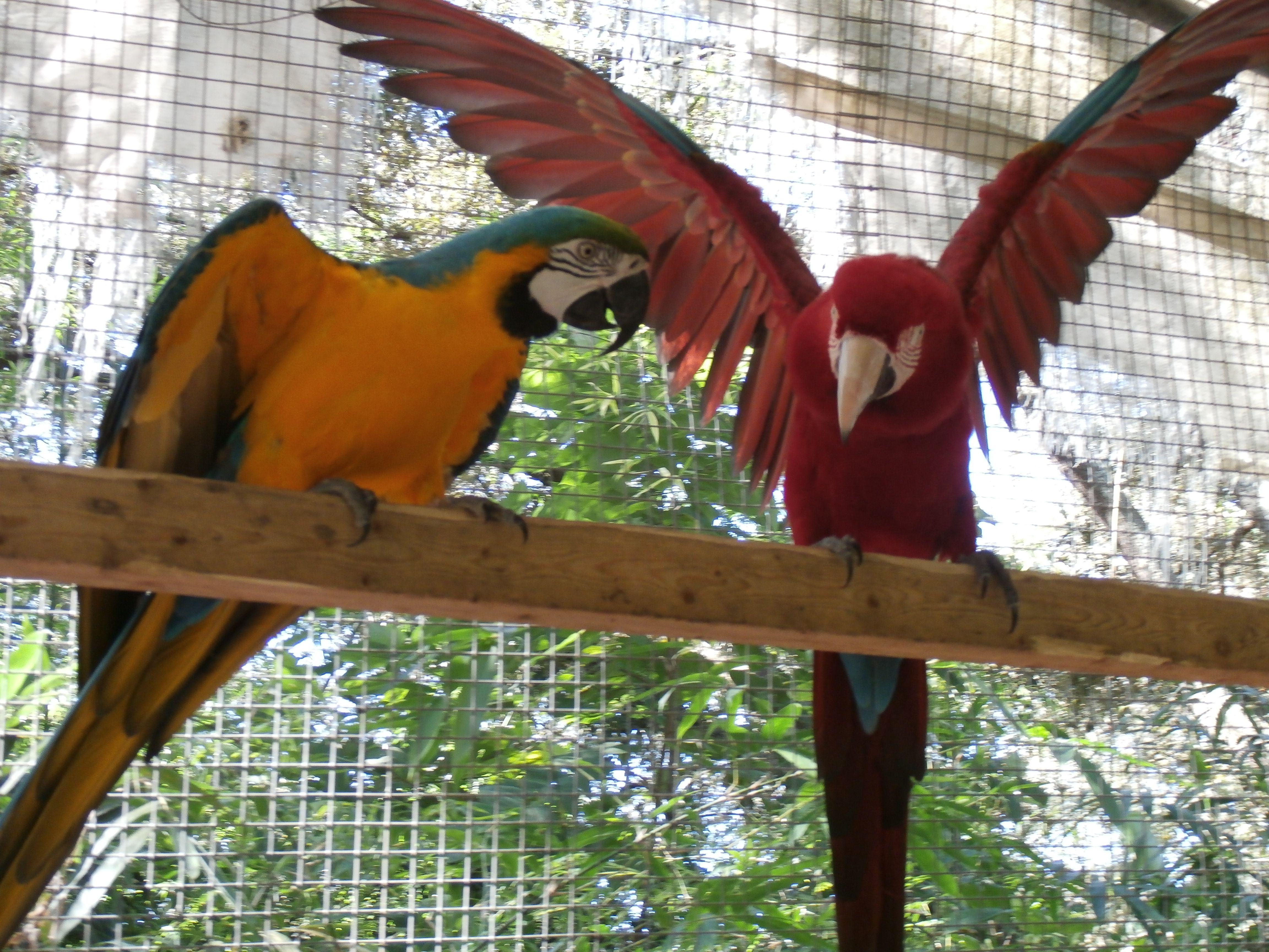 Birds at Zaksee Bird Sanctuary
