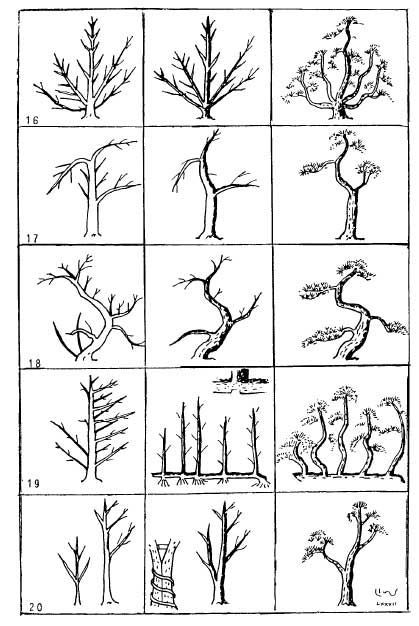 pruning a bonsai tree to care for this living work of art