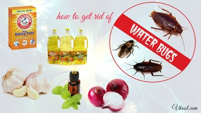 14 Solutions How To Get Rid Of Water Bugs Naturally Fast Get Rid Of Waterbugs How To Get Rid Rid