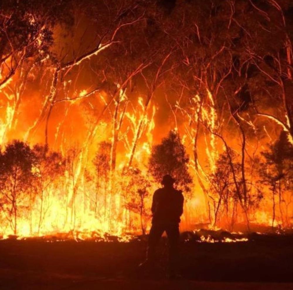Natascha Röösli on Twitter in 2020 Australia, Fire, Fire