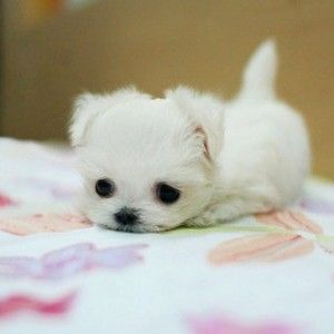 Cute Baby Puppy Photos Baby Animals Pictures Cute Animals Cute Baby Animals