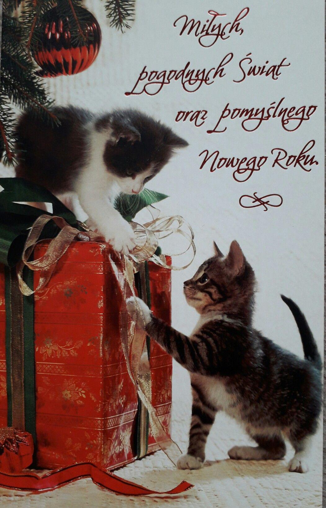Kartka Swiateczna Christmas Time Cats Haha