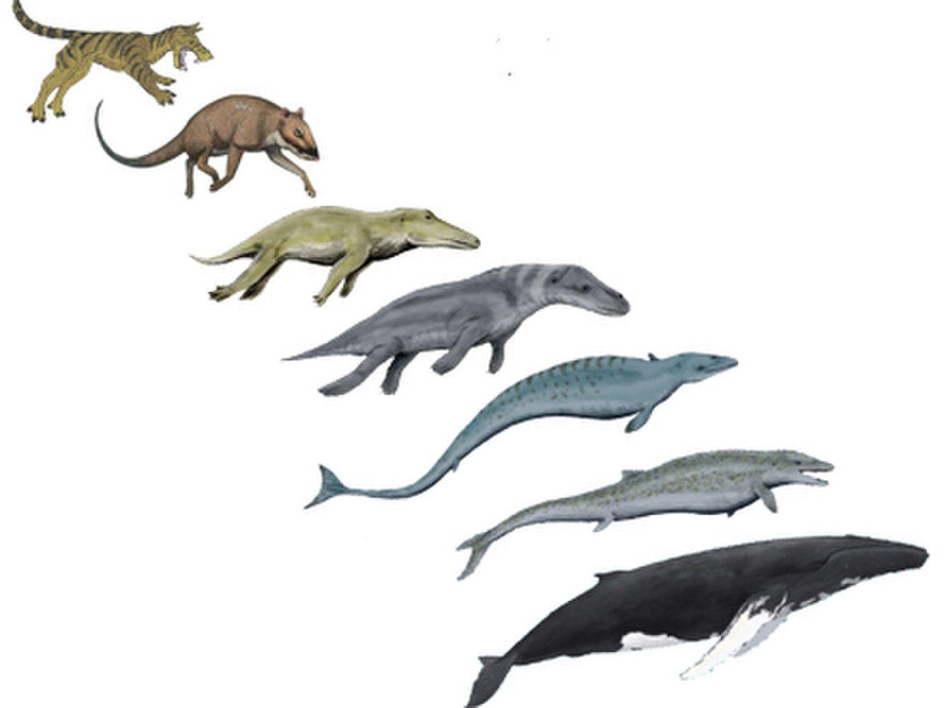 evolution of animals - HD1333×1000