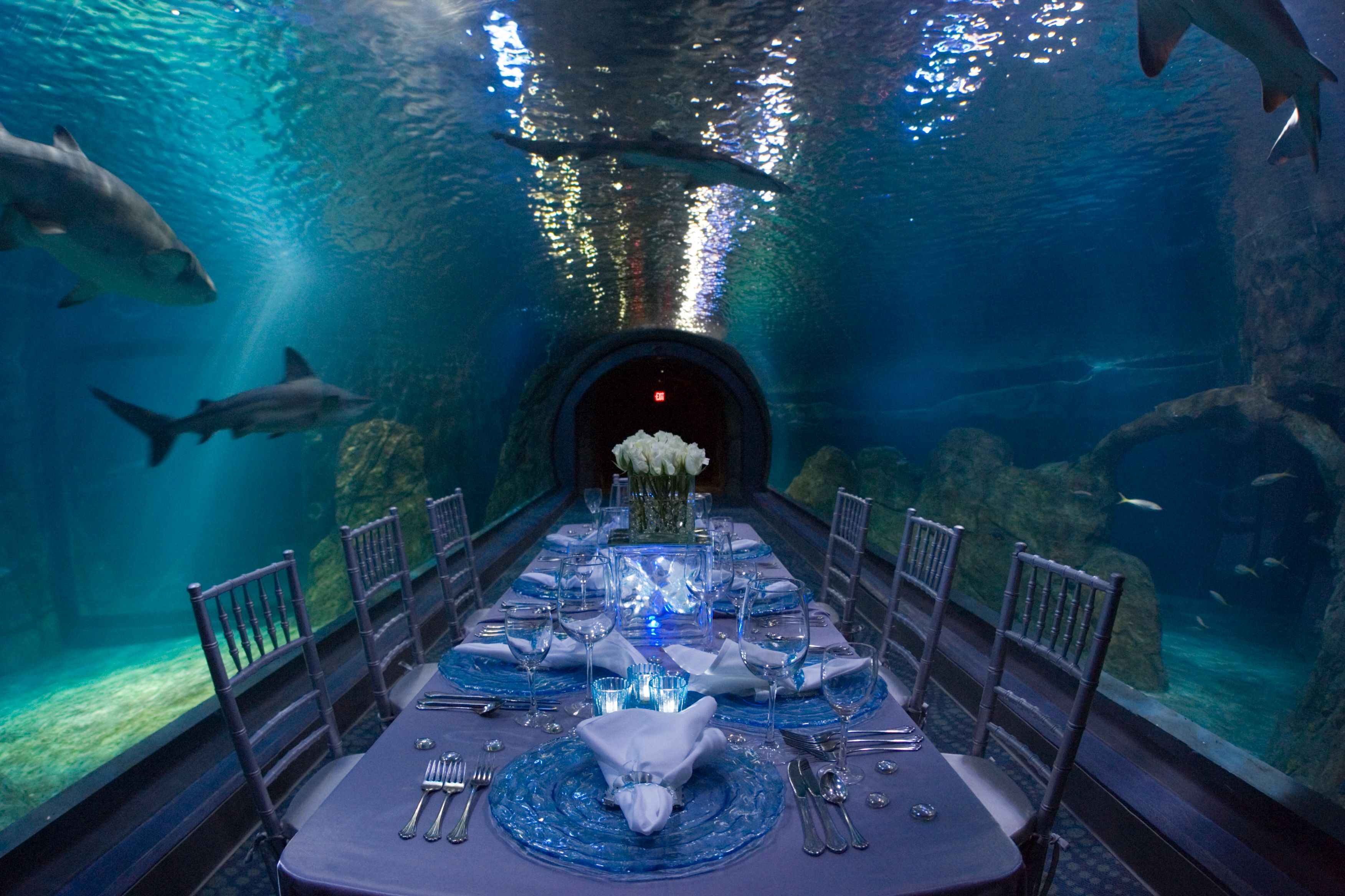 One of a kind events at Adventure Aquarium, Camden New Jersey