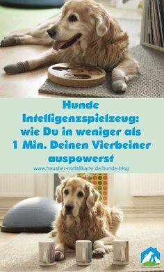 Photo of Hunde Intelligenzspielzeug: wie Du in weniger als 1 Minute Deinen Vierbeiner schnell und einfach auspowerst!