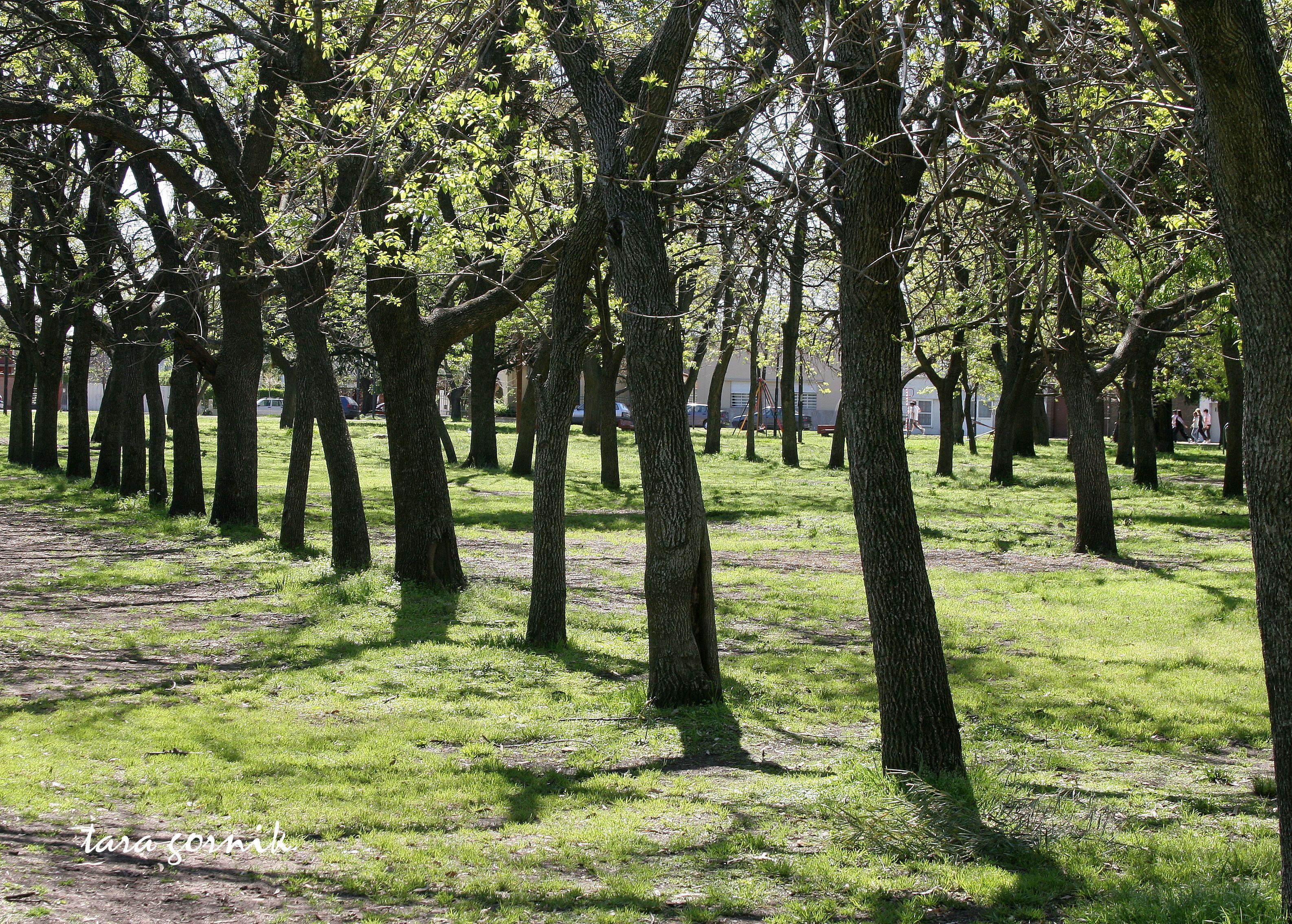 Perceptive Perspective Landscapes Landscape Perspective Patterns In Nature