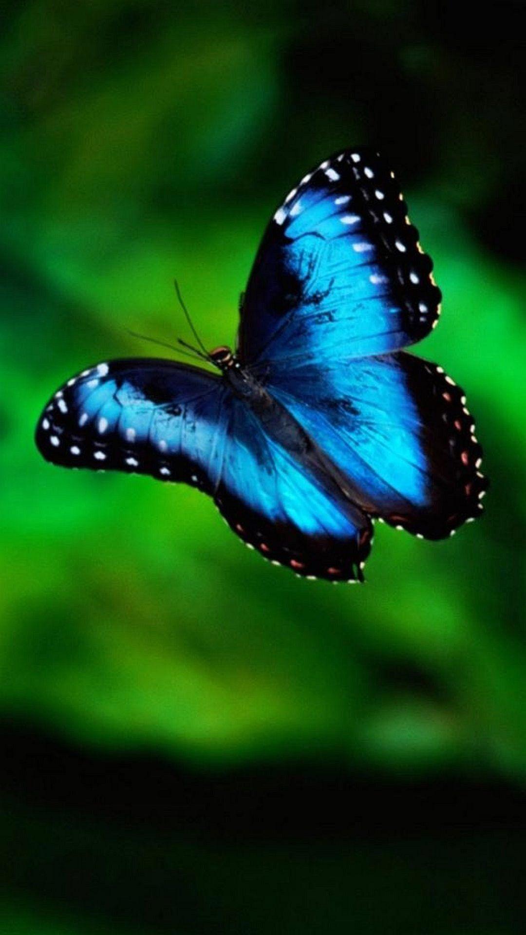 Blue Butterfly 4k Wallpaper - Wallpaper