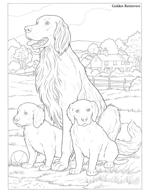 Golden Retrievers Dog Coloring Page Detailed Coloring Pages Color