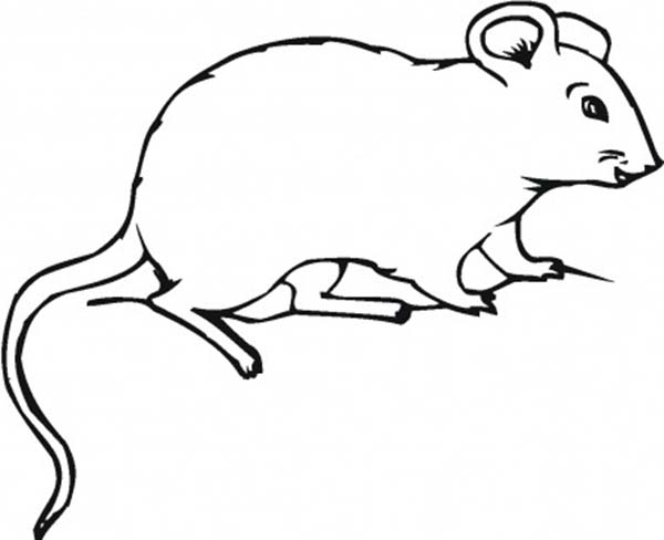 Pin On Mouse And Rat Coloring Pages